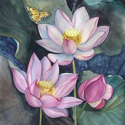Цветы лотоса и бабочки