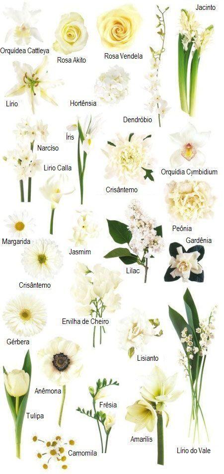 Blumen Und Farben Blumen Farben Namen Von Blumen Hochzeitsblumen Weiss Arten Von Blumen