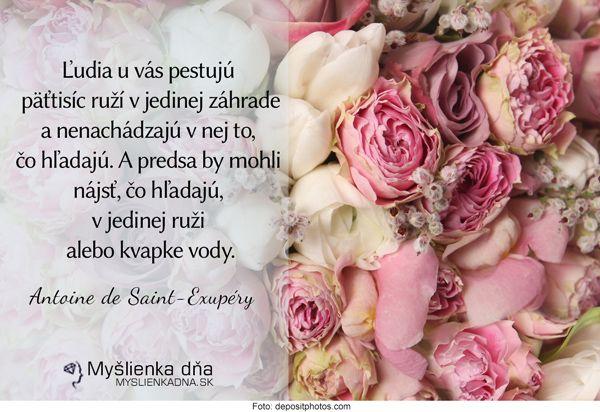 Ľudia uvás pestujú päťtisíc ruží vjedinej záhrade anenachádzajú vnej to, čo hľadajú. Apredsa by mohli nájsť, čo hľadajú, vjedinej ruži alebo kvapke vody. Antoine de Saint-Exupéry