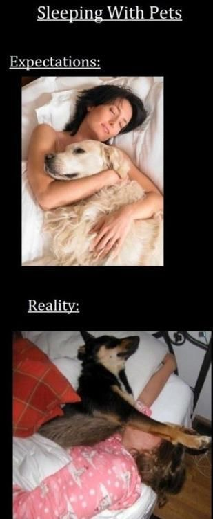 Sleeping with pets. Very true. I'm lucky to get edge of queen size bed.