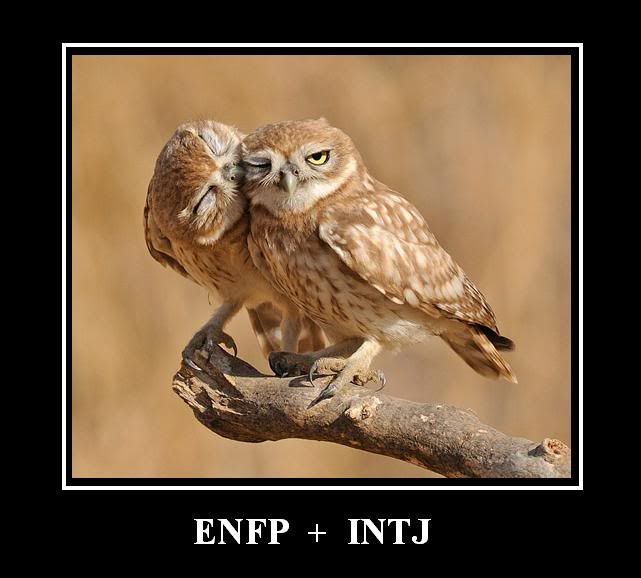 intj enfp dating Intj relationships in people with the intj personality type approach things the way they do with most situations: making dating especially difficult for them.