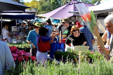 Orange Grove Organic Food Market  Every Saturday at Perry Street and Balmain Road, Orange Grove Public School
