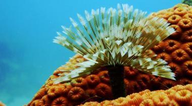 Ilhas do Rosário e São Bernardo  - Vida submarina a pleno