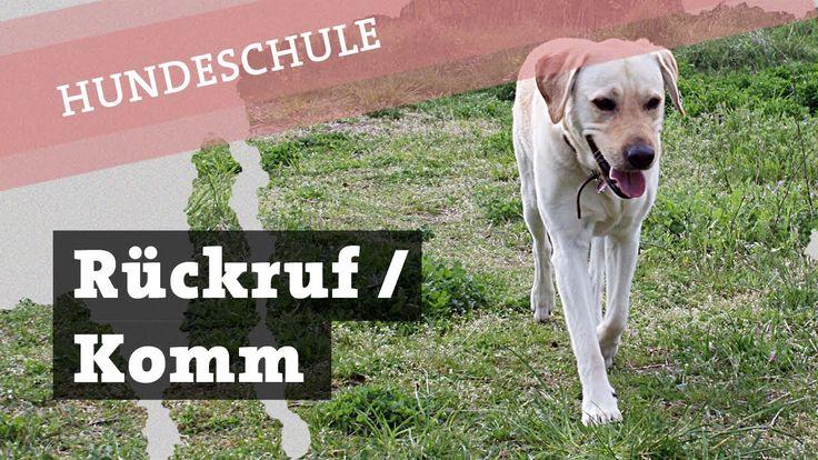 Hund KOMM Rückruf Beibringen Festigen Hier Her Training Rückruftraining ...