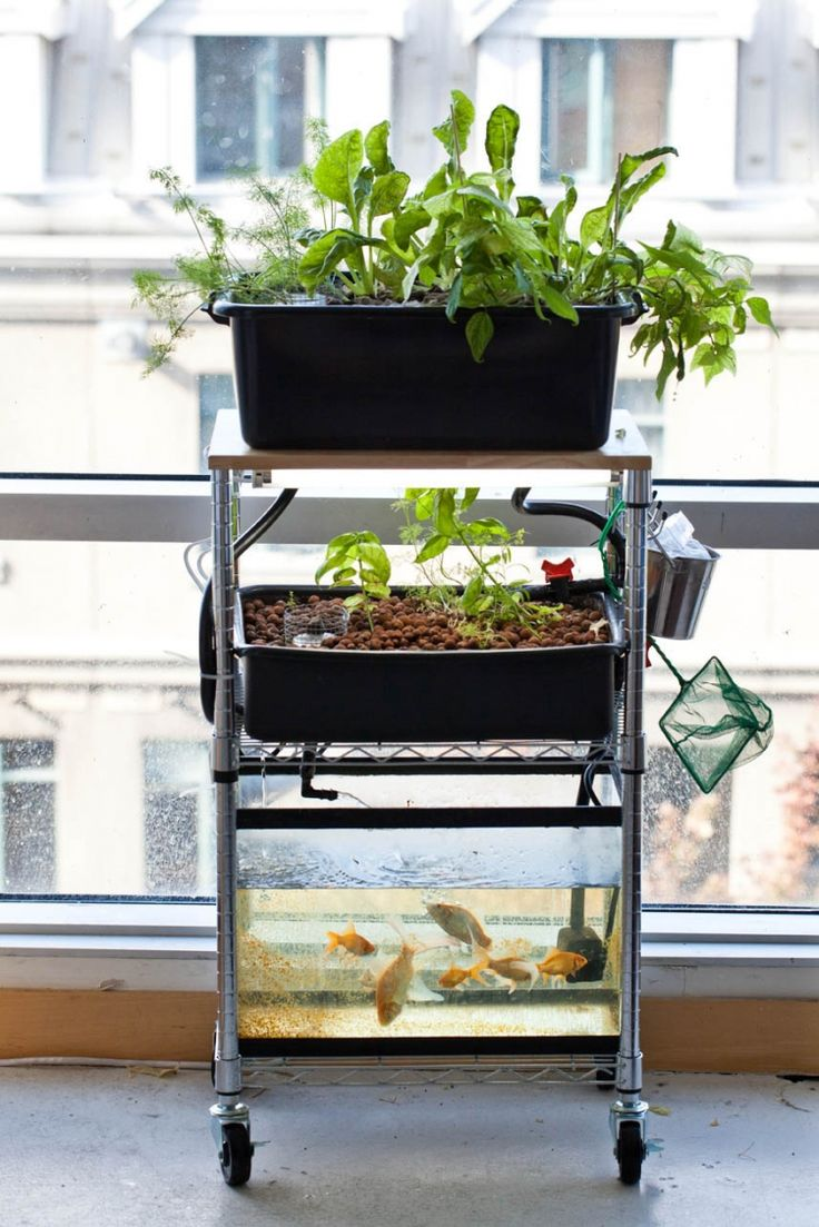 Do It Yourself Home Design: Build You Own Mini Aquaponic System And Grow Leafy Greens