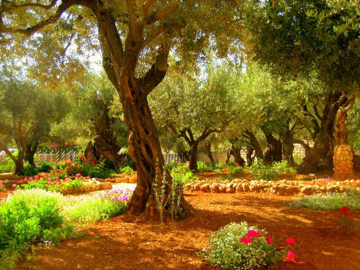 The Garden of Gethsemane is a biblical place where Jesus prayed... If I were here with F, I think I'd have a little pray as well for our future as man and wife.