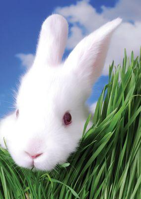 White Rabbit #postcards