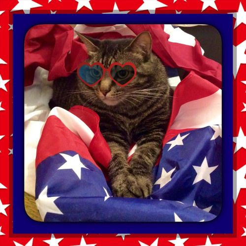 Monty loves America.  #firefinch #Nashville #4thofjuly #redwhiteandblue #murica #america #godbless #catsofig #catsofinstagram #catlife #nashvillepaw @nashvillepaw  (at Fire Finch)