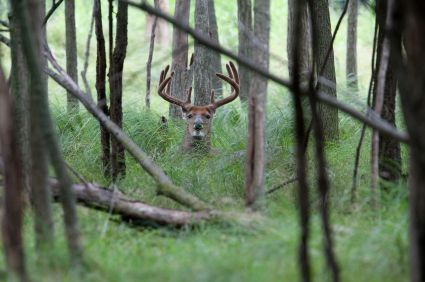 How to Create the Perfect Deer Habitat | Part 2