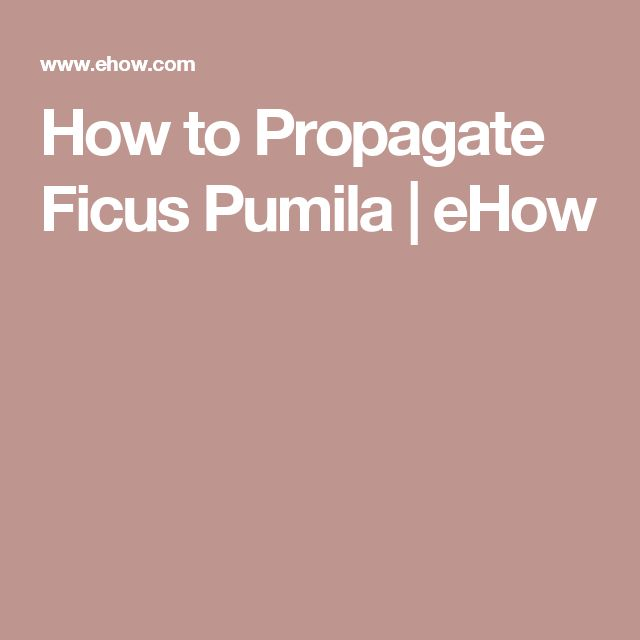 How to Propagate Ficus Pumila | eHow