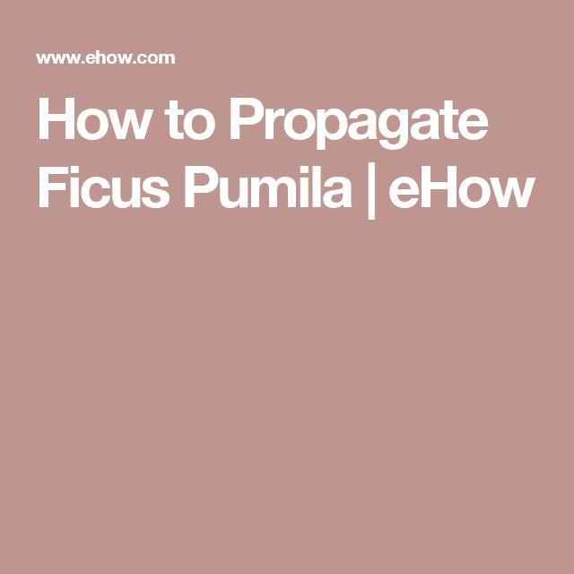 How to Propagate Ficus Pumila | eHow