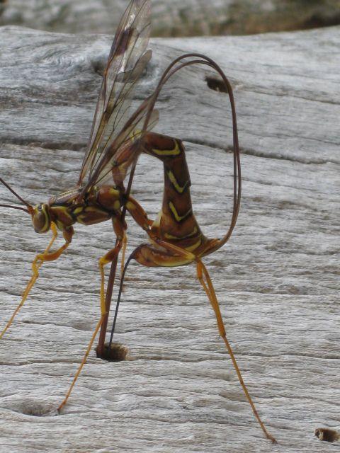 weird bugs | strange bug