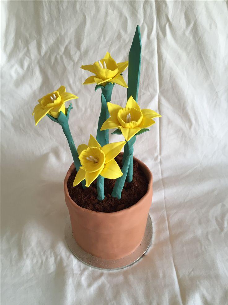 Daffodil pot cake  For Daffodil Day