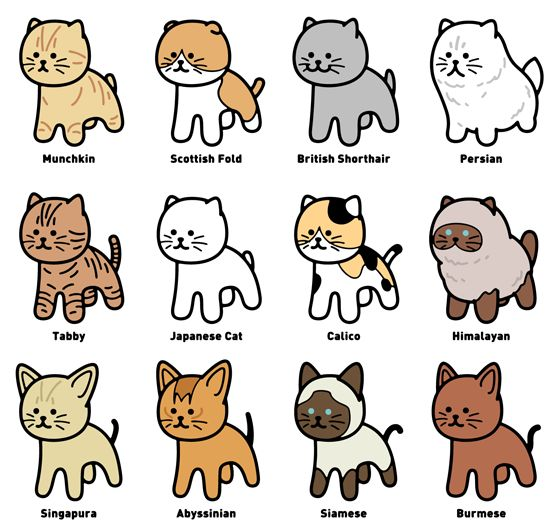 The various types of Cat