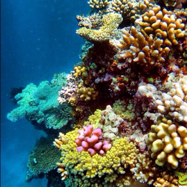 Tropical Paradise - Port Douglas Snorkelling #portdouglas #greatbarrierreef #gr8reefm8  This is a beautiful to reason to save the reef