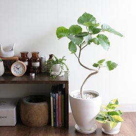 あのおしゃれな観葉植物の名前は?インテリア・観葉植物【画像】【育て方】まとめ - NAVER まとめ