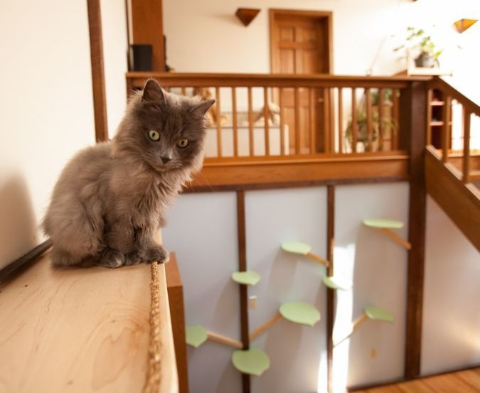 how to build cat walkways in your house