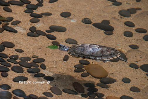 scuba diving ?!  / © kitty's corner   kngscorner kngscorner-wildlife…