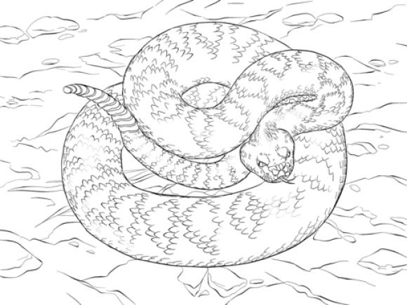Rattlesnake Coloring Page Coloring Pages Super Coloring Pages