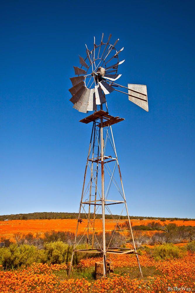 Afrique du Sud: le Namaqualand