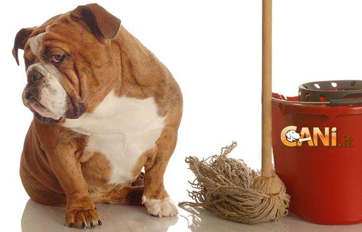 Come rimuovere l\'odore dell\'urina dei cani e realizzare dei repellenti naturali