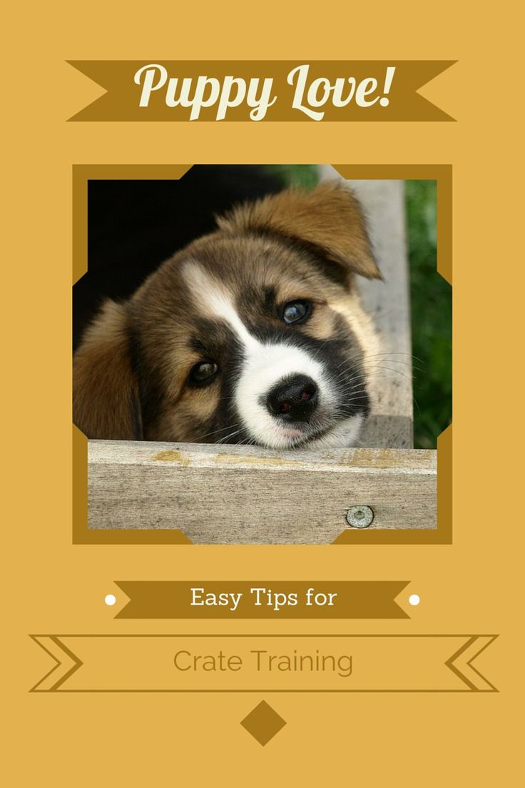 Tips For Easy Puppy Crate Training: Check out our tips for easy puppy crate training and help your new puppy find a safe place that's all his own!