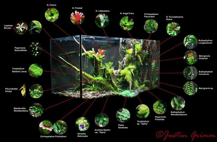 Peninsula Vivarium - in love with this vivarium