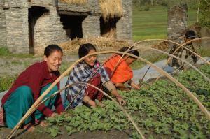 Grootste moestuin in Nepal | Favoraid
