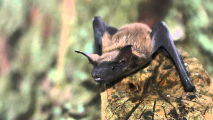 Fun Facts About Bats--Use for student research project.