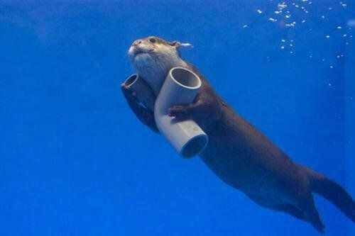 he needs those parts for his space ship he's going to otter space Puns 🎄 (@TheFunnyWorId) | Twitter