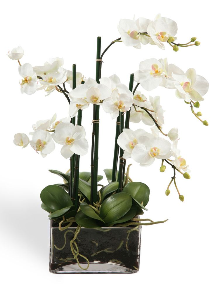 Faux White Orchid Centerpiece In Glass Buss Fiorina Nina