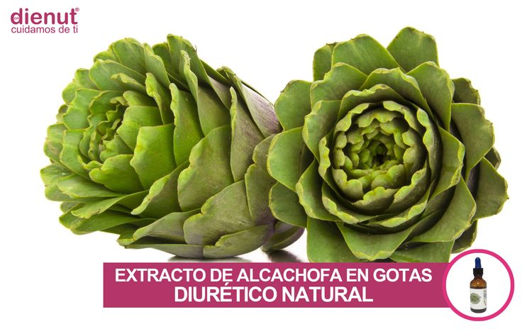 Extracto de alcachofa: diurético natural http://www.dienutstore.com/extracto-alcachofa/