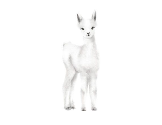 Bébé Lama, pépinière Art, dessin au crayon, pépinière gris, impression des animaux, les animaux Art bébé, Cria, décor de mur de pépinière, esquissez Art Print
