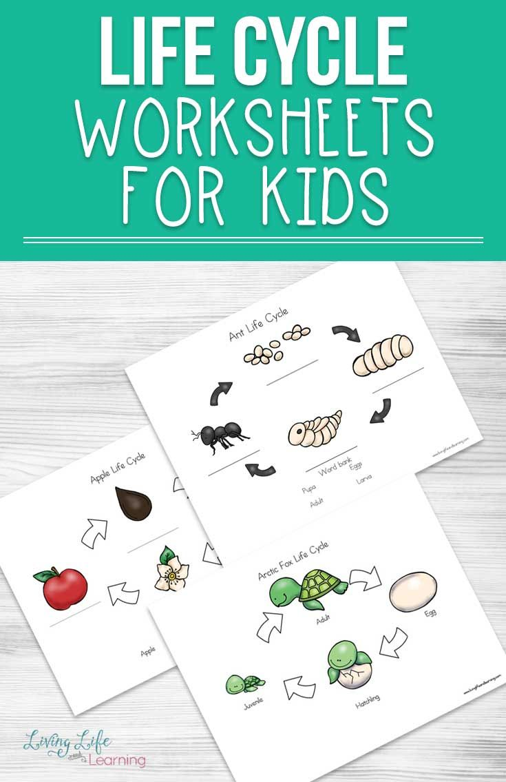 Life Cycle Worksheets For Kids Life Cycles Worksheets For Kids Printable Activities For Kids [ 1135 x 735 Pixel ]