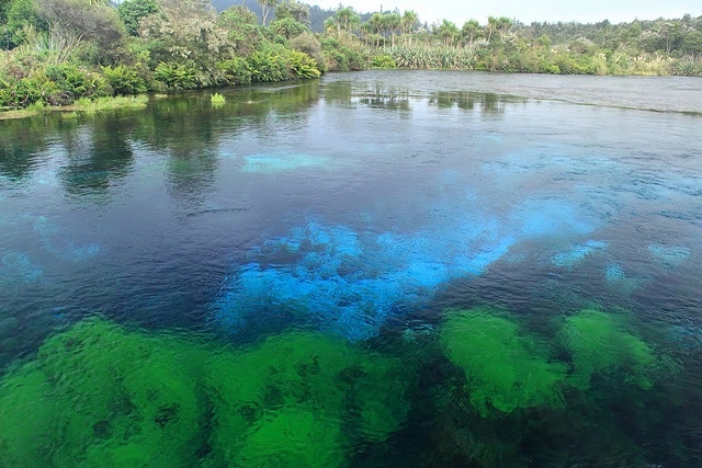 The clear waters of Te Waikoropupu Springs ('Pupu Springs') in New Zealand. Photo courtesy of Dr. Benjamin Ross.