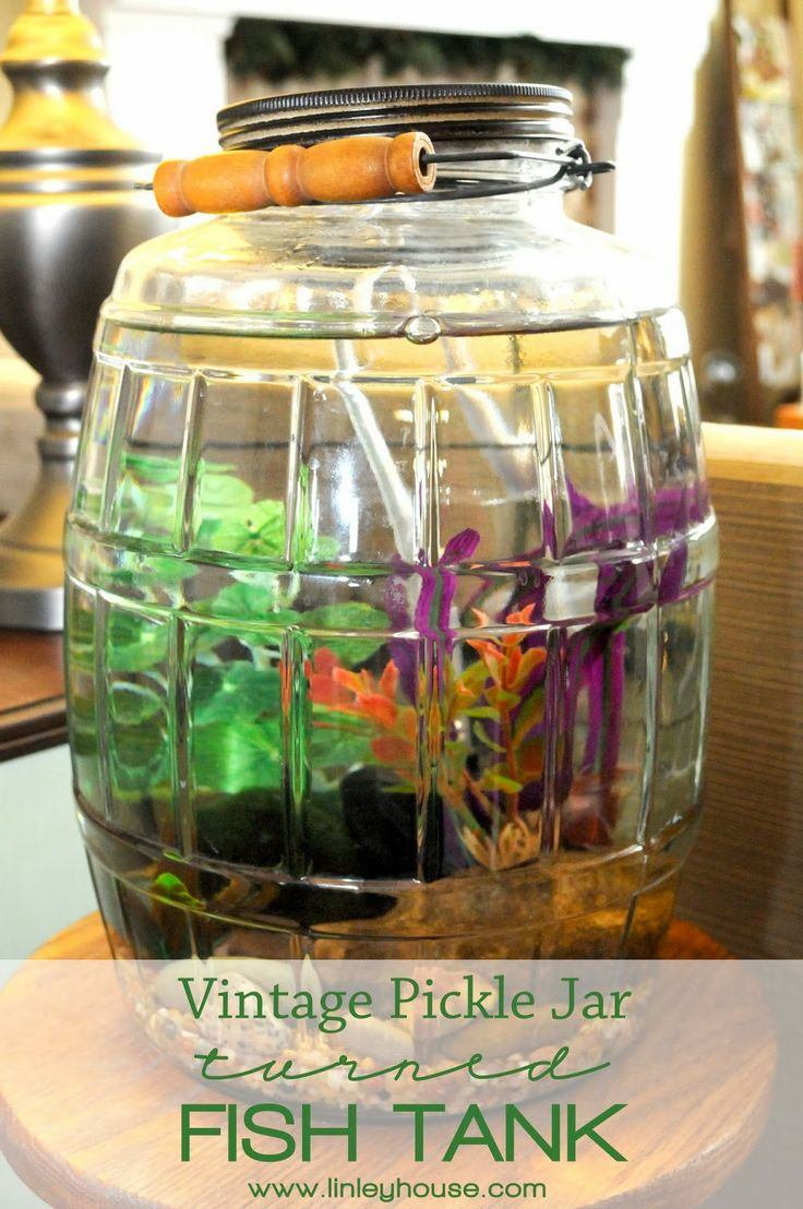 96 best images about fish tank aquarium on pinterest for Best fish for bowl