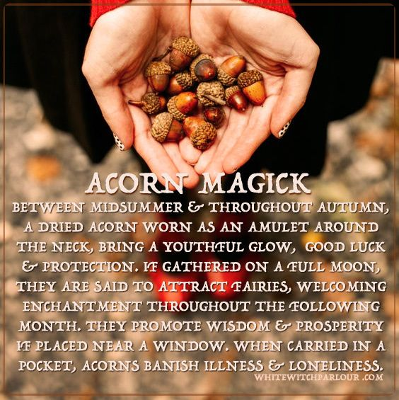 acorn-magick                                                                                                                                                     More