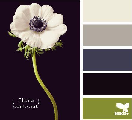Navy hall tree, cream walls, black door & gray wall, cream/gray curtains, any rug color, green accents