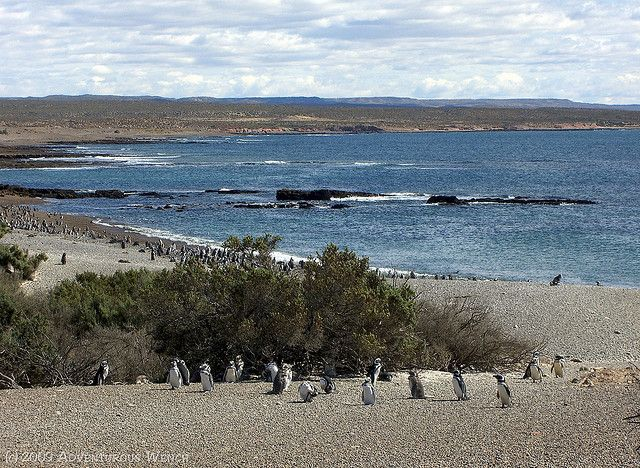 Punta Tombo - where penguins breed