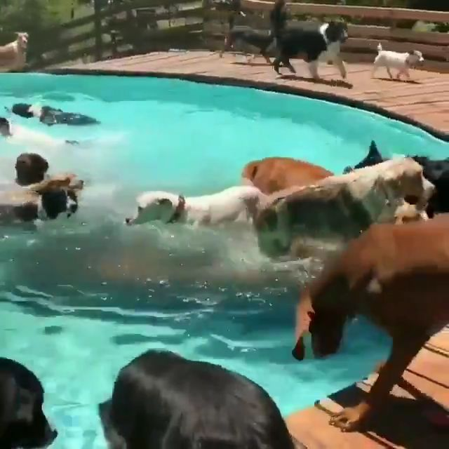 the final word pool celebration for shelter canines