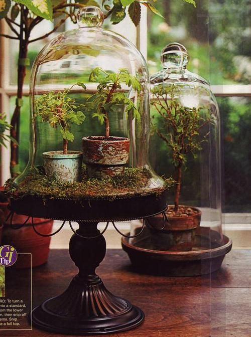 Terrariums from unknown magazine article