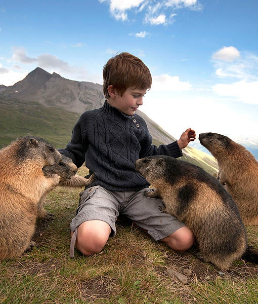 Friends come in all shapes and sizes. According to the (U.K.) Daily Mail, an 8-year-old boy has befriended a usually skittish group of marmots during his yearly visits to the Austrian Alps.: 8 Year Old, Animals, Pet, Boys, Austrian Alp, Kid, Furry Friends