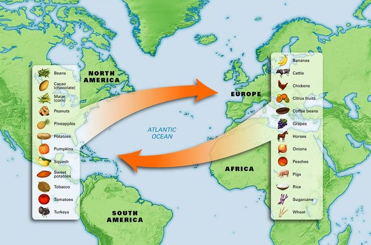 The Columbian Exchange is known as the global transfer of foods, plants, and animals during the colonization of the Americas. The transfer brought together the Eastern and Western hemispheres. Corn and potatoes were probably the most important items to travel from the Americas to the rest of the world.