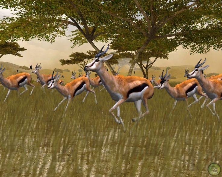 Wildlife+Safari+Animals+Pictures | African Safari Animal Pictures - Animal Pictures