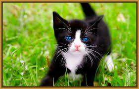 Resultado de imagen para fotos de gatitos tiernos para imprimir