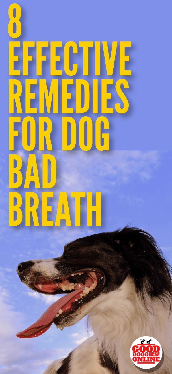 Check out these dog bad breath remedies that will help keep your dog smelling fresh. #dogs #dogownertips #dogcare