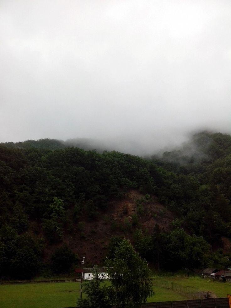 #vsco #vscocam #outdoor #forest