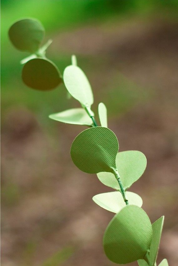eucalyptus stems - paper flowers for gift, wedding, or decor