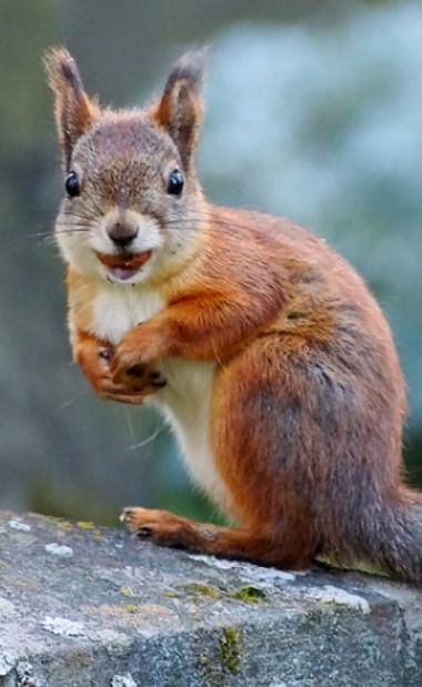Gallery of Happy Squirrels  (*Feelin' Squirrely group board*)