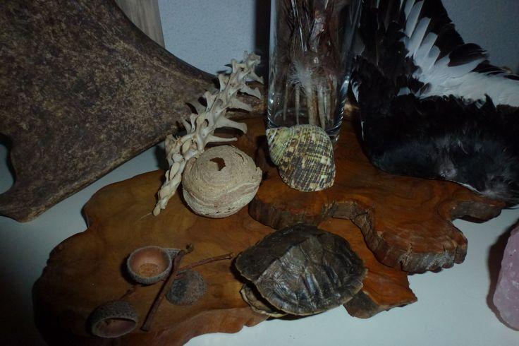 Schatten van moeder aarde, een ruggenwervel gevonden in de polder. Een klein wespennestje, een geweistang, de vleugel van de scholekster. Een schildje van een kleine schildpad, een schelp en wat hulsjes van eikennootjes.